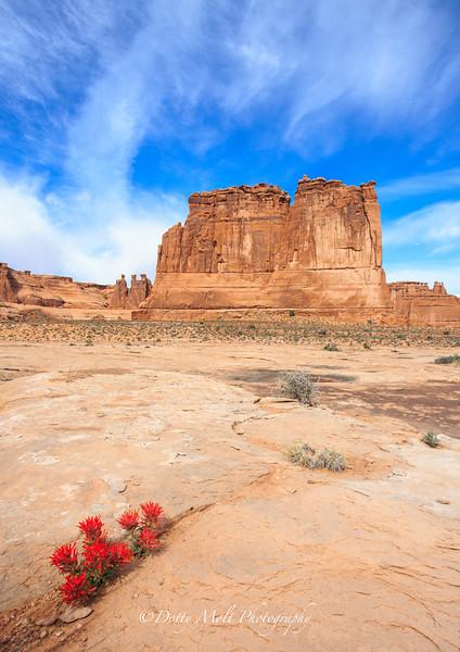 Canyonlands The Organ Indian Paintbrush