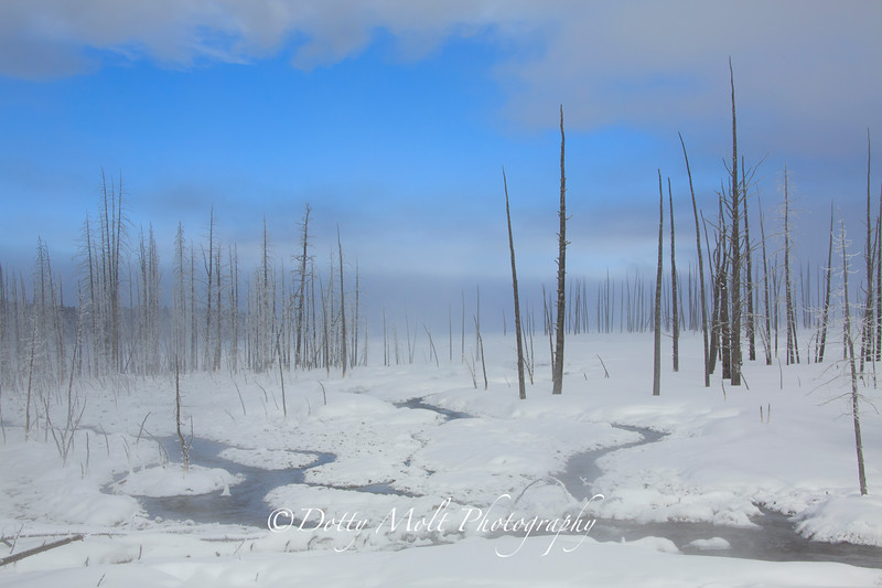 Morning Sun and Fog, Yellowstone National Park, Montana