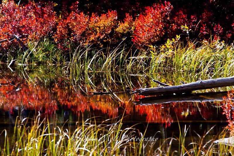 Siesta Lake in the Fall, Tioga Pass Road, Yosemite