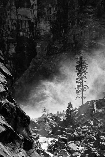 Yosemite Misty Tree