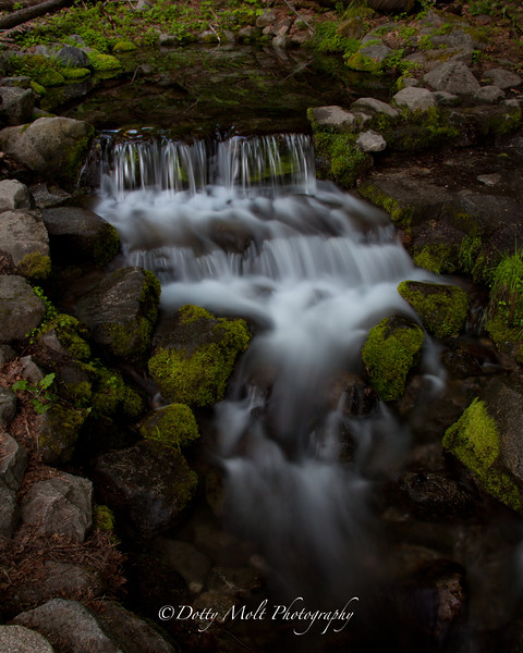 Yosemite Fern Spring