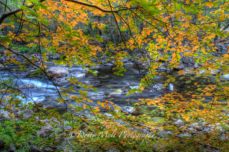 Fall Color along the Merced River, Yosemite