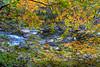 Fall Color along the Merced River, Yosemite