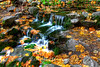 Yosemite Fern Spring in Fall