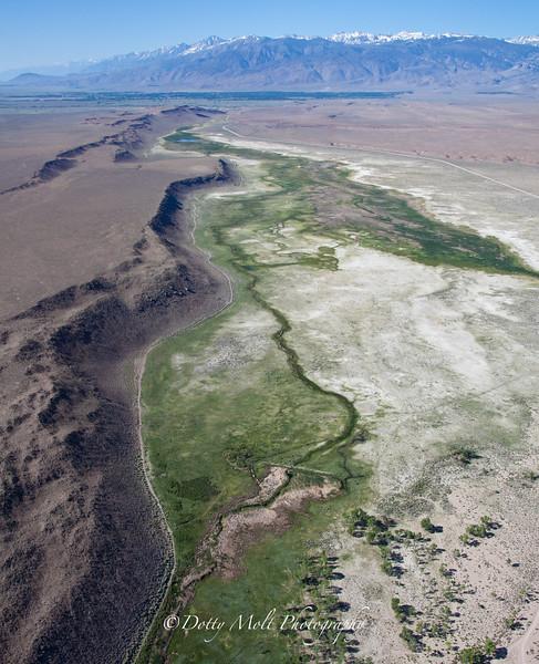 Volcanic Meadow