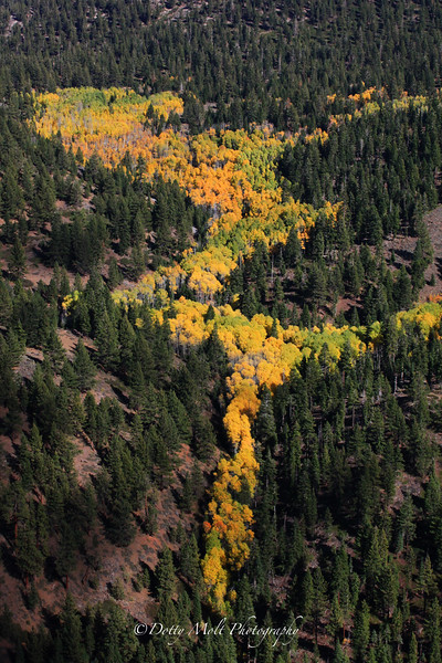 The Shape of Fall
