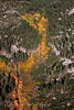 Aspens from Above