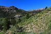 Mt. Rose Meadow