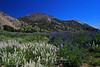 Mt. Rose Meadows