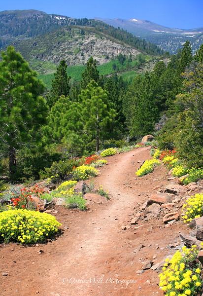 Flower Trail to top of Jones Creek Loop to Whites Creek
