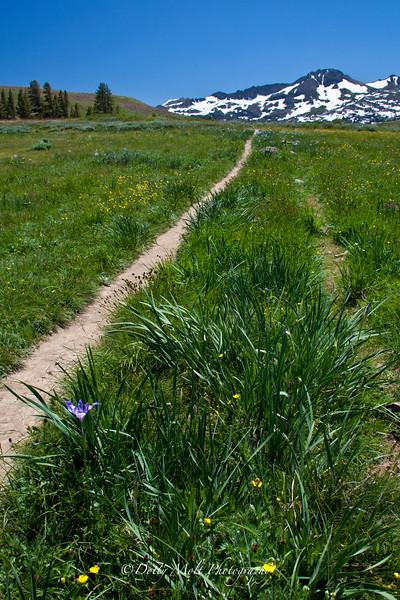 Iris on Meiss Meadow Trail