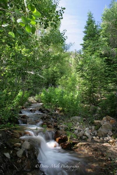 Whites Creek in Spring