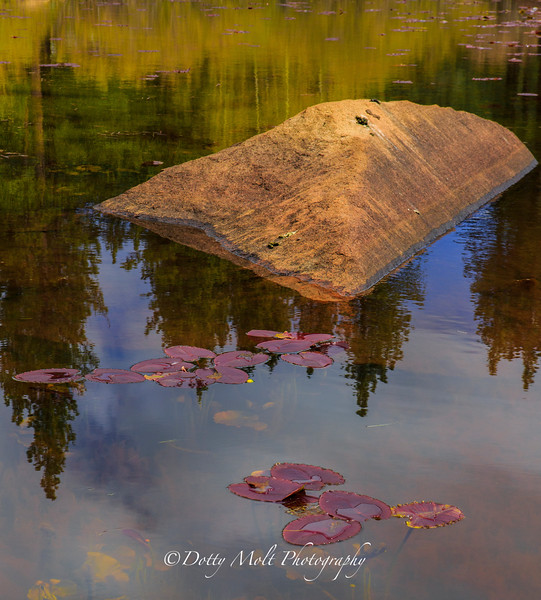 Lilypads on Rock Lake Ophir Creek Trail