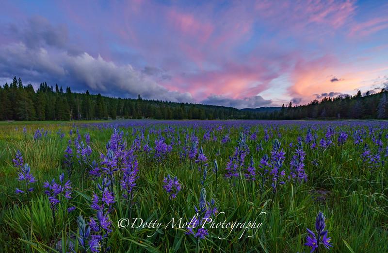 Sagehen Meadow Random Beauty