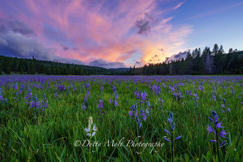 Sagehen Meadow Uno Blanca