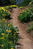Flowers along Jones White Creek Trail