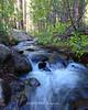 Whites Creek Spring runoff