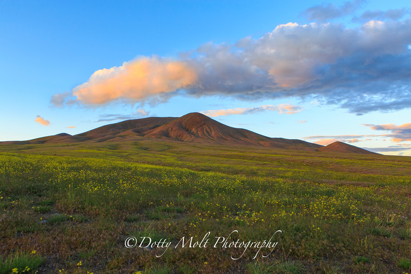 Winnemucca Mustard Field