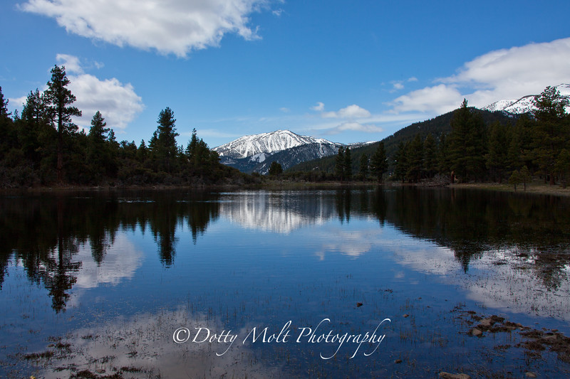 Dry Pond Reflections