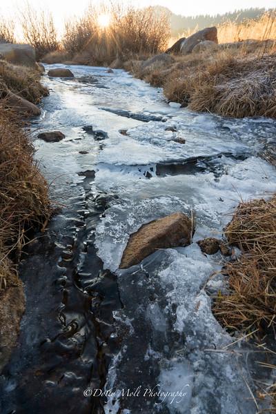 Ice on Ophir Creek