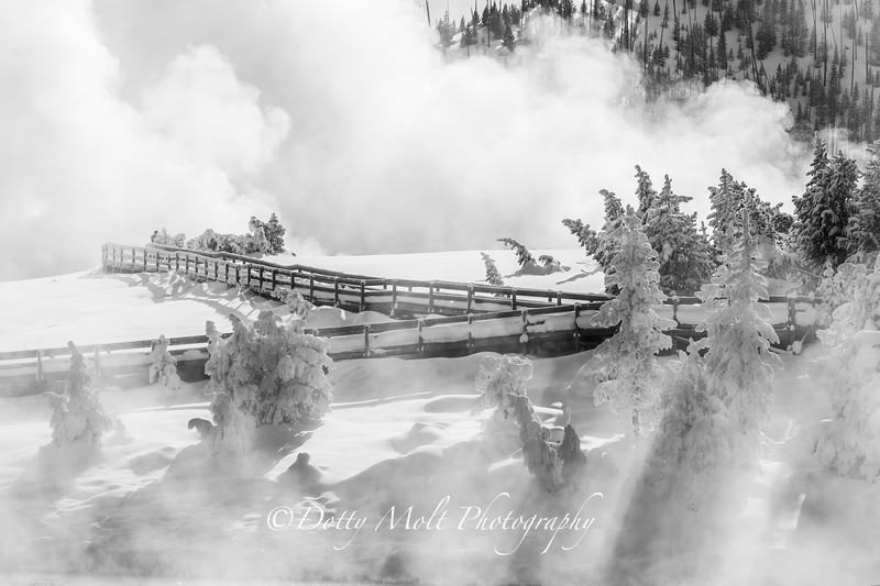 Sunrays through the Fog, Yellowstone