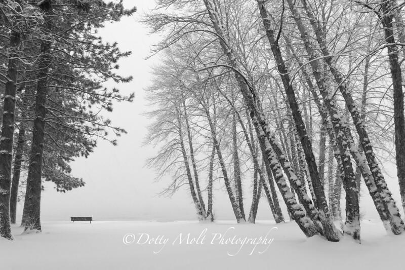 Silence of the Snow