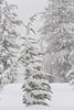 Dr. Suess Christmas Tree