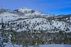 Mt. Rose Bluebird