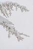Snowcone Branches