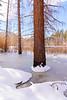 Frozen Pine 2