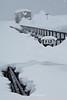 Frozen Tracks, Alaska