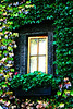Far Niente Ivy covered window
