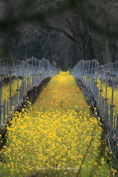 Hall of the Mustard King, Sonoma, California
