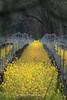 Hall of the Mustard King, Sonoma, California