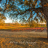 Bray Vineyards Amador County, California