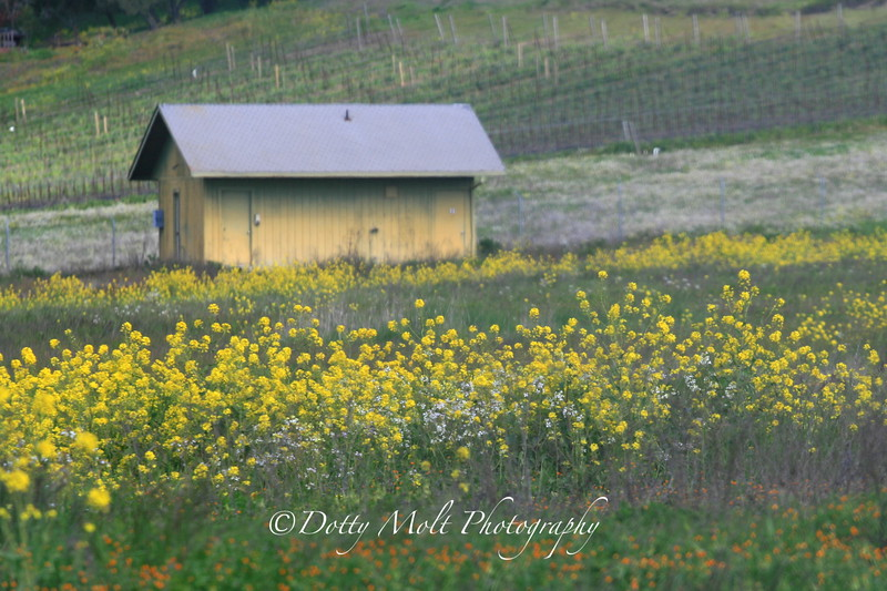 Mustard Meadow Sonoma, CA