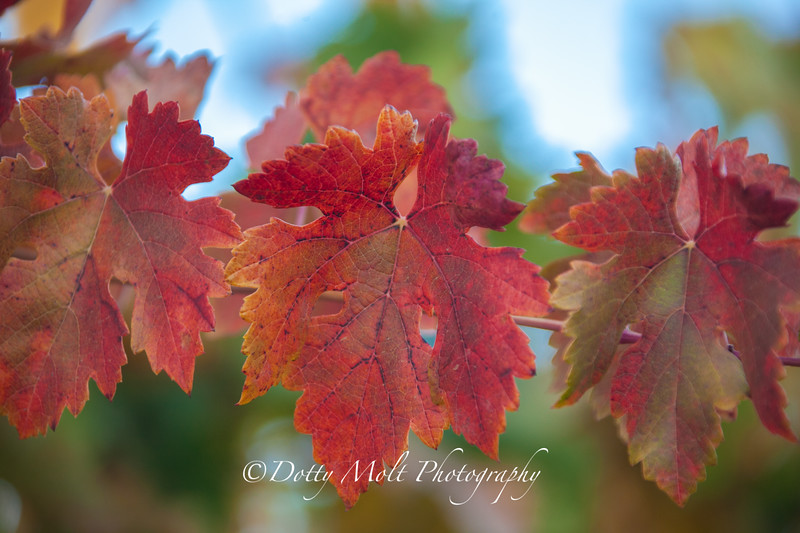 Three Leaves Amador County
