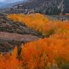 Mt. Rose Fall Color