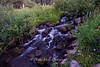 Babbling Brook Mt. Rose Wilderness 2