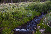 Mt. Rose Wilderness Babbling Brook 3