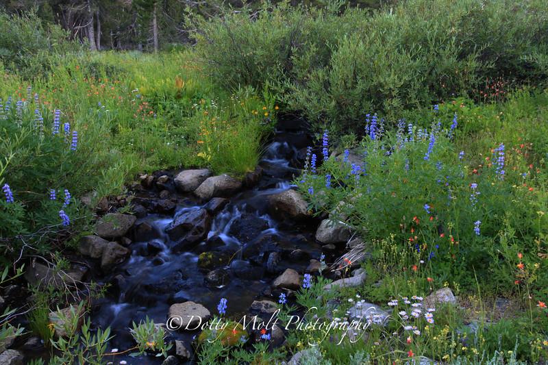 Tamarack Wildflower  Brook