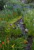 Mt. Rose Wetlands Trickling Stream