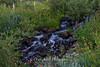 Babbling Brook Mt. Rose Wilderness 1