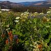 Glorious Garden, Carsons Pass, Ca