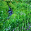 Meandering Meadow Stream at dusk