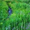 Fireweed Meadow