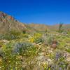 A walk in the desert Anza Borrego