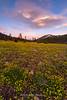 Tahoe Meadows Alpine Buttercup Setting Sun