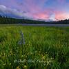 Sagehen Meadow Singular Sunset