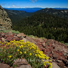 Sulfur Flowers and Lake Tahoe, Barkers Pass, California